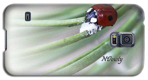 Ladybug On Pine Galaxy S5 Case