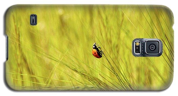 Ladybug In A Wheat Field Galaxy S5 Case by Yoel Koskas