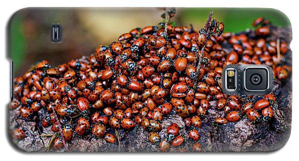 Ladybugs On Branch Galaxy S5 Case by Garry Gay