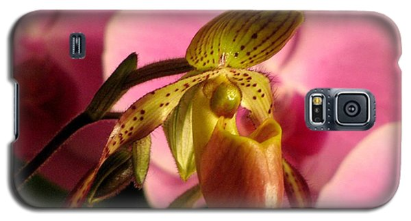 Galaxy S5 Case featuring the photograph Ladyslipper With Pink by Alfred Ng
