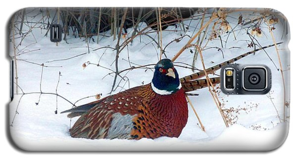 Galaxy S5 Case featuring the photograph Lake Country Pheasant 2 by Will Borden