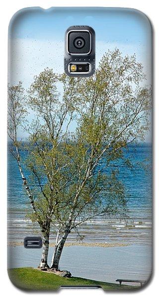 Galaxy S5 Case featuring the photograph Lake Michigan Birch Tree by LeeAnn McLaneGoetz McLaneGoetzStudioLLCcom