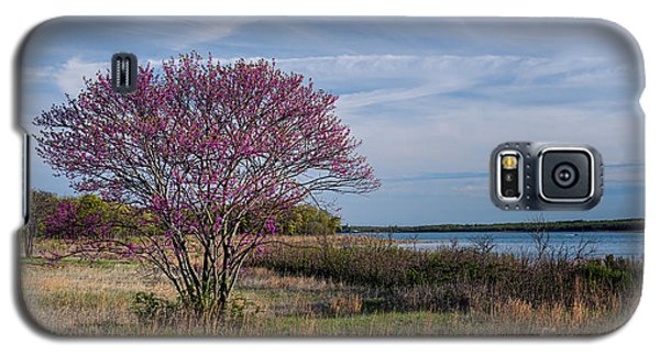Lake Murray Redbud Tree Galaxy S5 Case