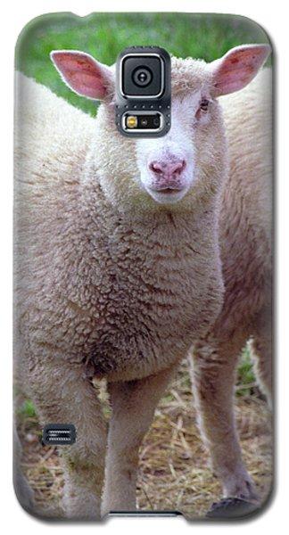 Lamb Galaxy S5 Case