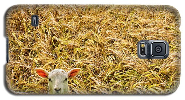 Lamb With Barley Galaxy S5 Case by Meirion Matthias