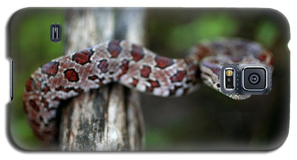 Lampropeltis Calligaster Galaxy S5 Case by Kyle Findley