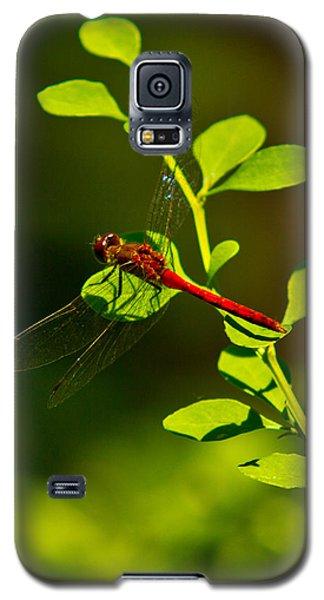Landing Pad Galaxy S5 Case