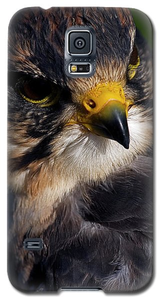 Lanner Falcon Galaxy S5 Case