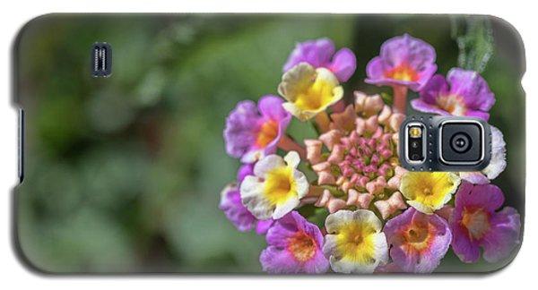 Lantana In Bloom Galaxy S5 Case