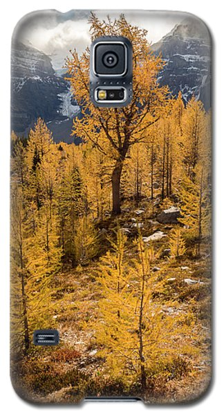 Larch Family Galaxy S5 Case