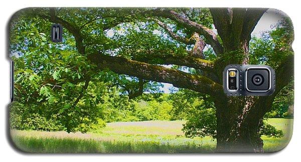 Large Connecticut Oak Galaxy S5 Case