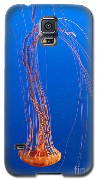 Large Jelly Fish Galaxy S5 Case by Darcy Michaelchuk