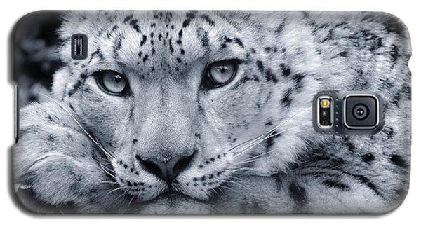 Large Snow Leopard Portrait Galaxy S5 Case