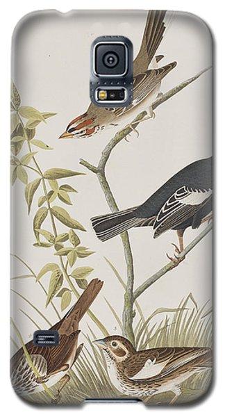 Lark Finch Prairie Finch Brown Song Sparrow Galaxy S5 Case