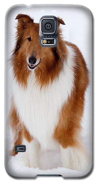 Lassie Enjoying The Snow Galaxy S5 Case by Shane Holsclaw