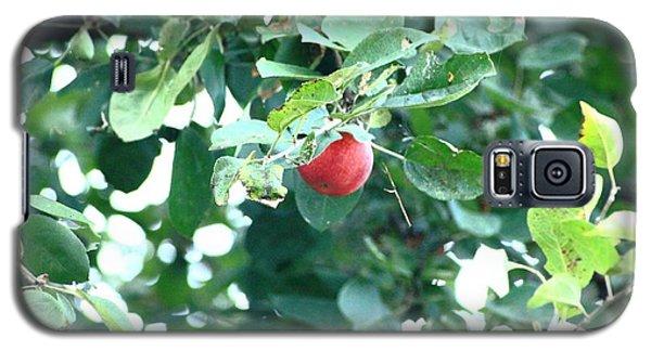 Last Apple Galaxy S5 Case