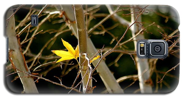 Galaxy S5 Case featuring the photograph Last Leaf by Kume Bryant