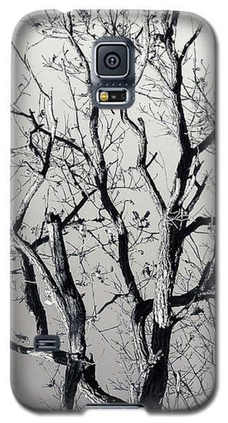 Last Light Oak Galaxy S5 Case