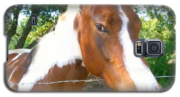 Animals Galaxy S5 Case - Last Week, I Met My First #horse! She by Shari Warren