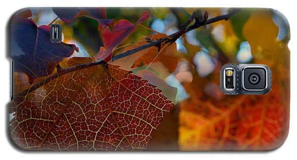Late Autumn Colors Galaxy S5 Case