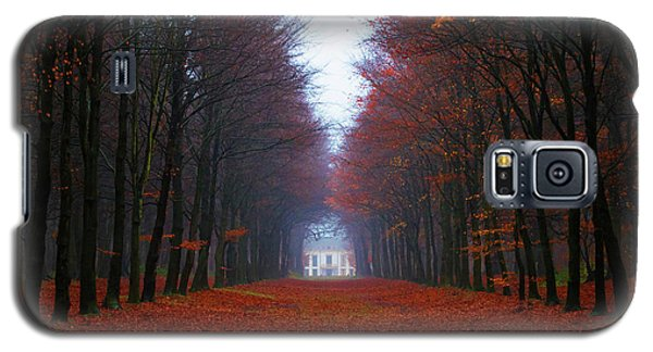 Late Fall Forest Galaxy S5 Case