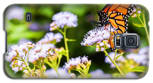 Galaxy S5 Case featuring the photograph Late In The Season Butterfly by Edward Peterson