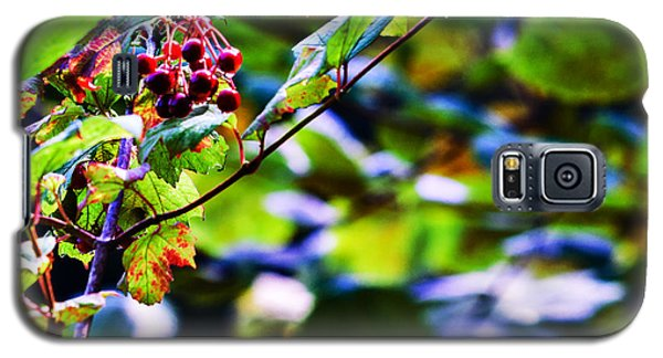 Galaxy S5 Case featuring the photograph Late Summer Rain by Edward Peterson