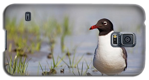 Laughing Gull On Taylors Creek Galaxy S5 Case