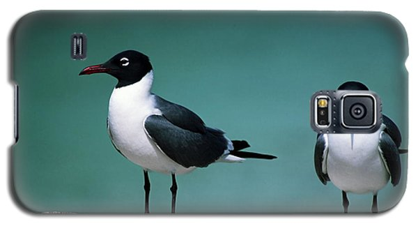 Galaxy S5 Case featuring the photograph Laughing Gulls by Sally Weigand