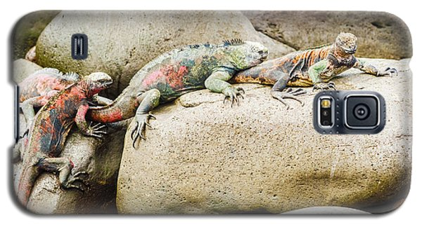 Lava Lizard On Galapagos Islands Galaxy S5 Case