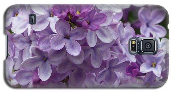 Lavender Lilacs Galaxy S5 Case