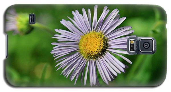 Lavender Serenity Galaxy S5 Case