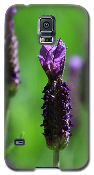 Lavender Spike Galaxy S5 Case
