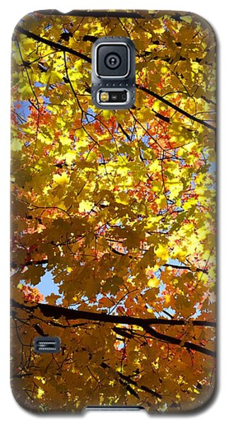 Galaxy S5 Case featuring the photograph Layers Of Autumn by Corinne Rhode