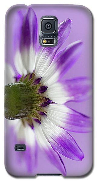 Layers Of Mauve Galaxy S5 Case