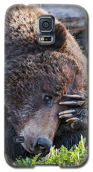 Lazy Bear Galaxy S5 Case