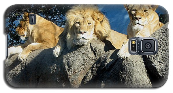 Lazy Day Lions Galaxy S5 Case by George Jones