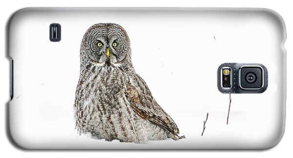 Le Curieux Galaxy S5 Case