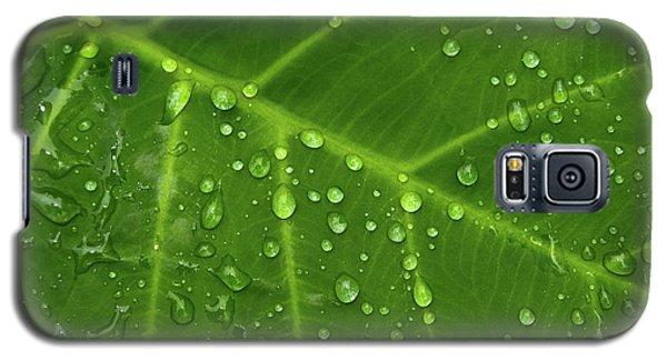 Leaf Drops Galaxy S5 Case by Art Shimamura