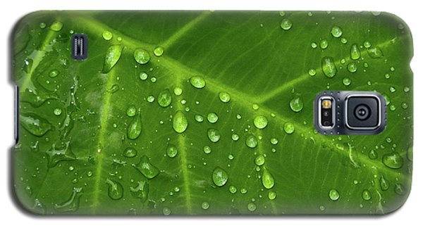 Leaf Drops Galaxy S5 Case