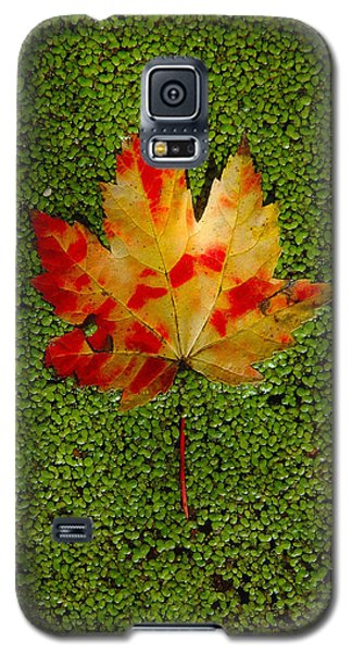 Leaf Floating On Duckweed Galaxy S5 Case