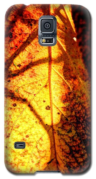 Leaf Light Galaxy S5 Case