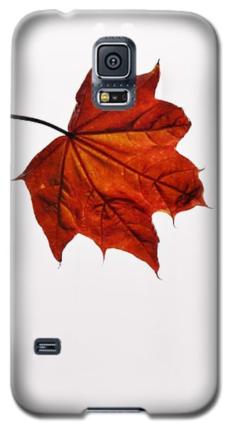 Leaf Galaxy S5 Case