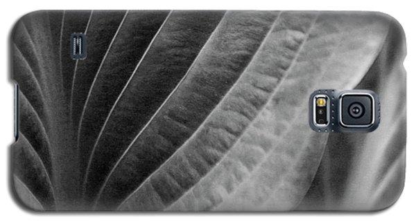 Leaf - So Many Ways Galaxy S5 Case by Ben and Raisa Gertsberg