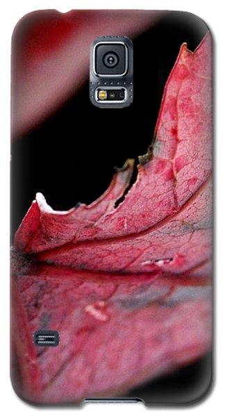 Leaf Study I Galaxy S5 Case