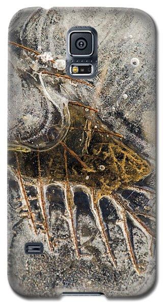 Leaf Veins In Ice Galaxy S5 Case