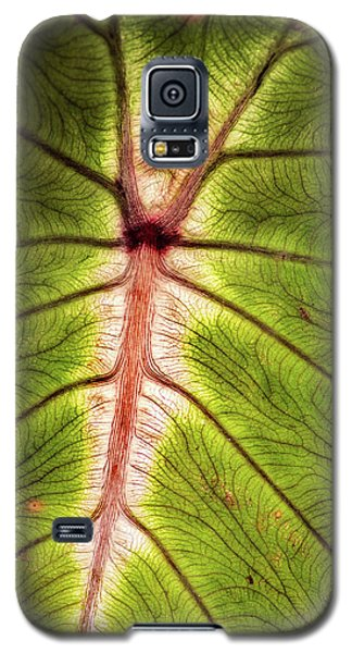 Leaf With Veins Galaxy S5 Case