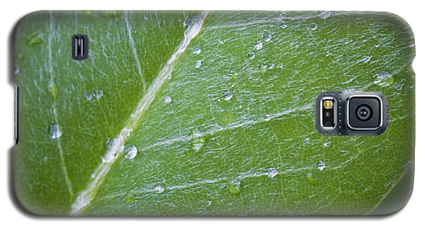 Leaf With Water Droplets Galaxy S5 Case