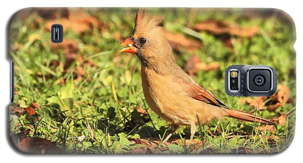 Galaxy S5 Case featuring the photograph Leafy Cardinal by Debbie Stahre