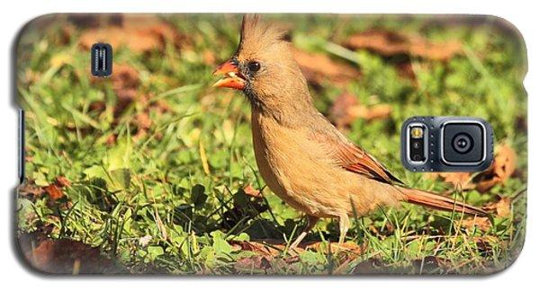 Leafy Cardinal Galaxy S5 Case